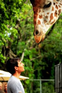 Man looking at giraffe to represent charitable giving to a number of causes